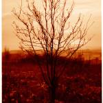 """""""Burning Bush"""" by mike_mcgee"""