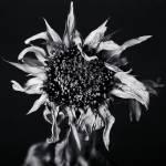 """Sundown 1"" by mike_mcgee"