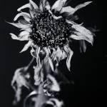 """Sundown 2"" by mike_mcgee"