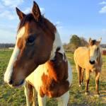 """""""Horses"""" by nicolepyrek"""