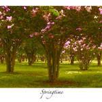 """springtime"" by peterems"