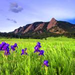 """Flatirons and Iris"" by naturesarena"