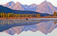 Teton Moose Reflection