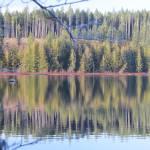 """WINTER WOOD ON THE LAKE"" by westcoastphotoart"