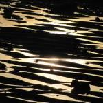 """""""MOONLIGHT"""" by westcoastphotoart"""
