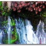 """Garden Falls"" by mbmarconi"