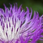 """""""Mystery Flower II"""" by jgraber"""