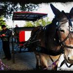 """New Orleans Carriage Ride"" by jbjoani2"