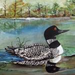 """Common Loon in George Lake"" by AmaliaJonas"