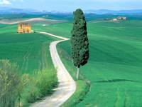 Country Road Tuscany