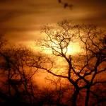 """""""Sunset & The Oak-Tree 037"""" by photographybydonna"""