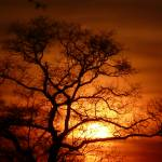 """""""Sunset & The Oak-Tree 041"""" by photographybydonna"""