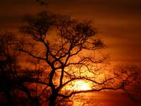 Sunset & The Oak-Tree 041