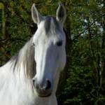 """Horse in White"" by AnneVis"