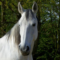 Horse in White