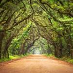 """""""Botany Bay Road - Edisto Island, SC"""" by DAPhoto"""
