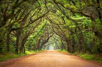 Botany Bay Road - Edisto Island, SC Photography