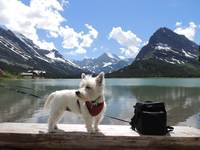 Miss Daisy Goes To Many Glacier