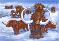 Wooly Rhino and Mammoths