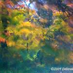 """Autumn Awash"" by DeborahWillardDesign"