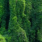 """Kudzu Background"" by DeborahWillardDesign"