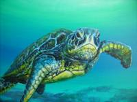 turtle close up