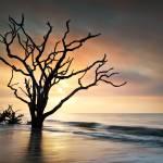 """Bone Yard Sunrise - Botany Bay, Edisto Island"" by DAPhoto"