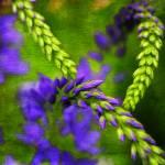 """Graphic Flora"" by DragosDumitrascu"