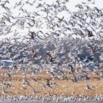 """Large Flock of Seagulls"" by mackflix"