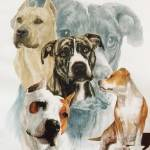 """American Staffordshire Terrier"" by BarbBarcikKeith"