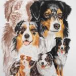 """Australian Shepherd"" by BarbBarcikKeith"