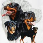 """Rottweiler"" by BarbBarcikKeith"