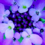 """Blue and Purple Flower"" by JaniceDunbar"