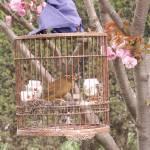 """""""caged bird"""" by lydiamarie007"""