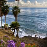 """Laguna In Bloom"" by pbk"