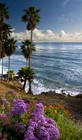 Laguna In Bloom