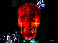 Red Skull In The Stars