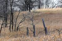 The Old Fence Line