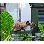 """""""Hemmingway cats"""" by jbjoani2"""