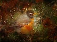 Where Do Robins Go When It Rains?