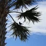 """""""Bird in Palm"""" by aimeesblog"""