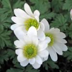 """White Flower"" by Terriair"