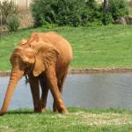 """Elephant Landscape"" by kimberlyfdr"