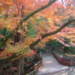 """Autumn leaves in Kyoto"" by JoEllis"