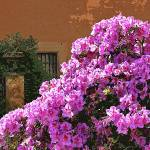 """Azalea on the Spanish Steps"" by Marina_L"