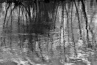 Millbury Reflection l   B&W