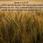 """scripture harvest is plentyfull matthew 9-37-38"" by BrianDunne"