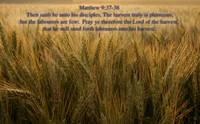 scripture harvest is plentyfull matthew 9-37-38