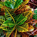 """Tropical Plant"" by PhotographsByCarolFAustin"