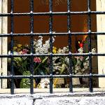 """Jailed Flowers"" by Marina_L"